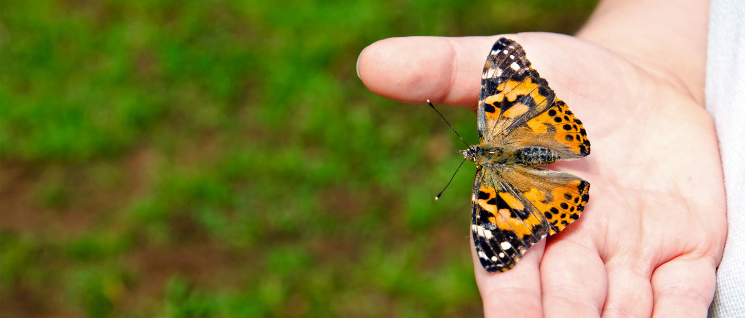 Person releasing painted lady butterfly from their hand