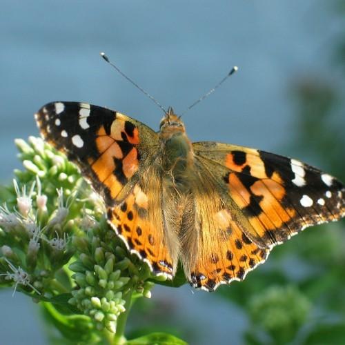 Butterflies by the Dozen