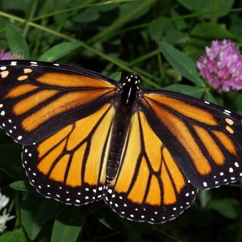 Butterfly Release Wedding Package 1