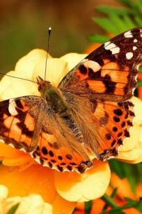 Butterfly Release Wedding Package 3